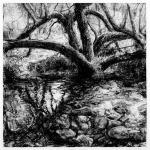 Tree Pool, East Baldwin