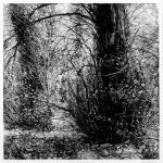 Trees, Bishops Court Glen