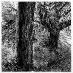 Festooned Tree, Bishops Court Glen