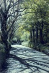 Dappled Lane, Ballachrink Santon