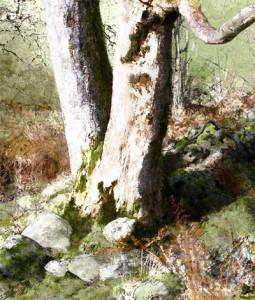 Tree Tumled Wall, East Baldwin